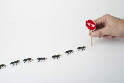 Ameisen bekämpfen Hausmittel