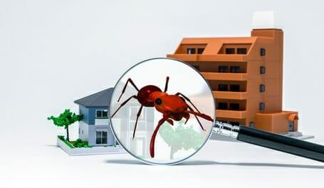 Ameisenfalle - Ratgeber